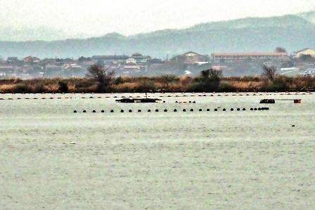 美保関町下宇部尾の赤貝(サルボウガイ)養殖場 ここから、江島大橋・大山が望めるとても景色の良い場所