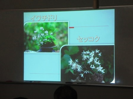 絶滅危惧植物のイワチドリとセッコク 実習では、この植付けを行いコケ玉を作ります